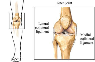 medial and lateral collateral knee ligaments