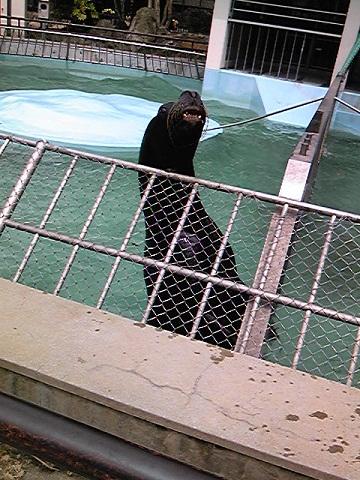 姫路市立動物園オタリア (2)