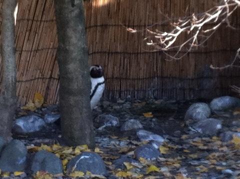 姫センのペンギン