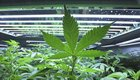 Rep. Wheatley introduces bill to legalize marijuana for recreational use in Pa.