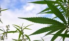 House Passed Legal Marijuana Bill Advances in New Mexico Senate