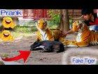 Fake Tiger Prank Vs Dog ( Dog never see Tiger but it afraid ) let Fun together