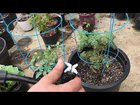 Automatic Plant Watering System + Self Watering System for Potted Plants + Bonus Dog Bowl Refill