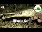 "Gar are considered ""trash fish"" and killed by many people because they are not good for eating and occasionally prey on more desirable species. Here is a video showing why they are NOT trash fish and what makes them some of the coolest animals in the world!"