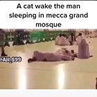 Cats are indeed Muslim.