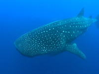 Galapagos 2010