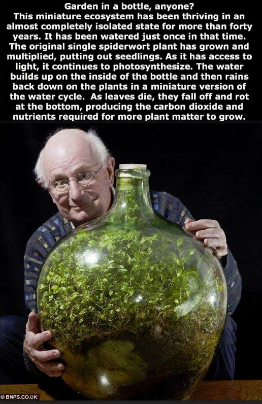 bottle a plant