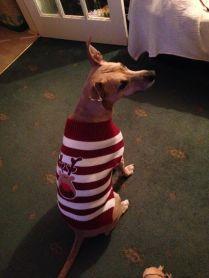 Hannah Meese's dog Star