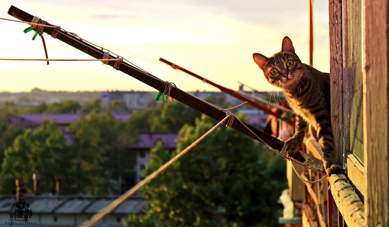Pisică tigrată ieșită pe balconul unui apartament la apus