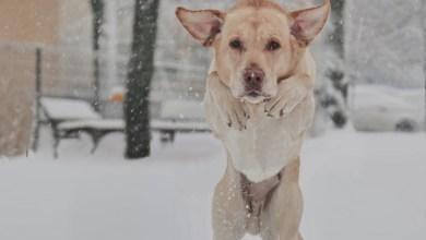 Photo of Cod galben de ninsoare în București. (Era mai neplăcut dacă era cod roșu)