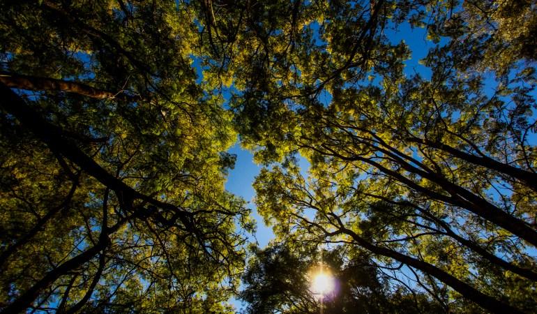 Somos nuestros árboles