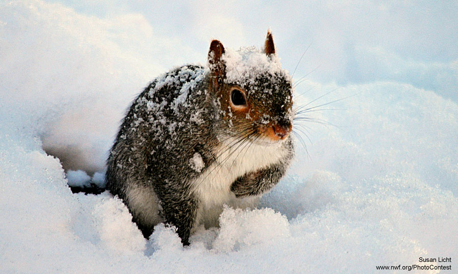 Image result for squirrels digging for nuts