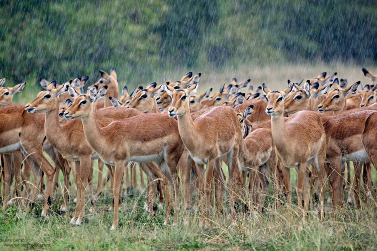 16 Photographs of Animals Caught in the Rain • The National Wildlife  Federation Blog : The National Wildlife Federation Blog