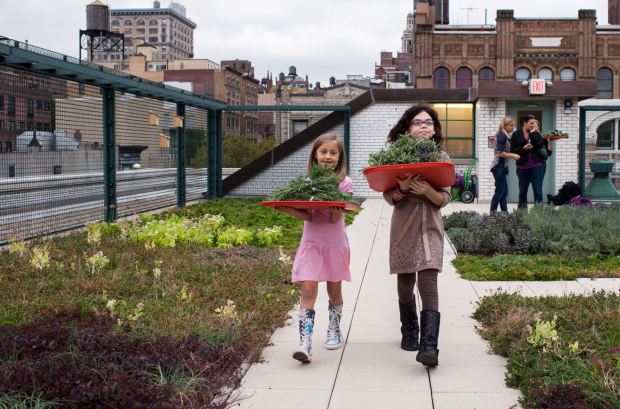 Students collect herbs on PS 41′s greenroof in Manhattan. Photo: Megan Westervelt