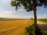 French fields.
