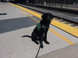 Fisher train