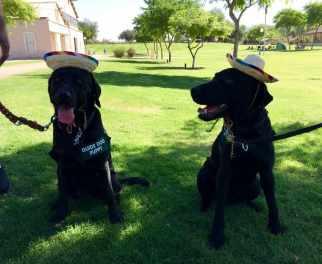 Siblings Fisher and Faith meet at Yuma Fun Day