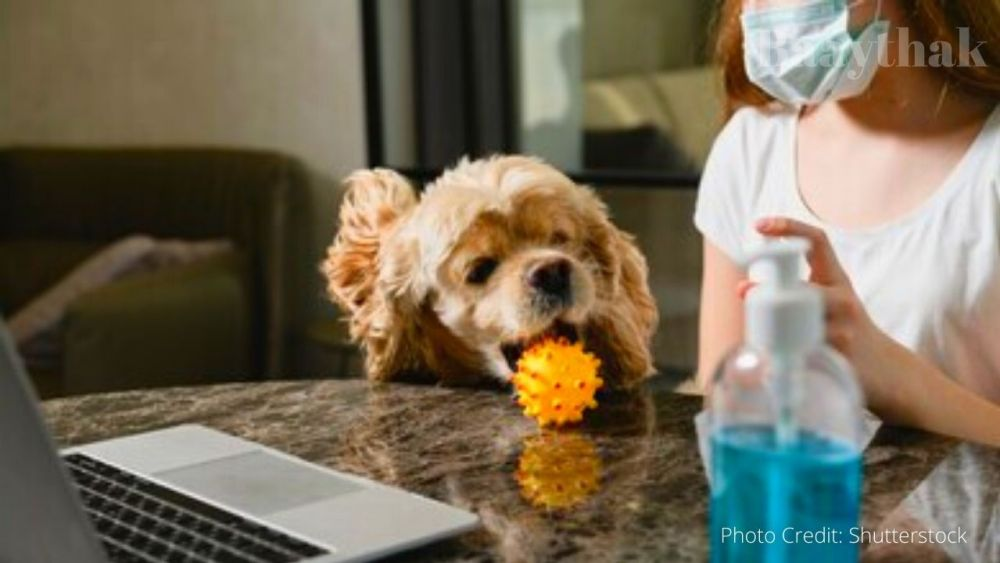 Is a regular sanitizer safe for your pet - Baaythak (4)