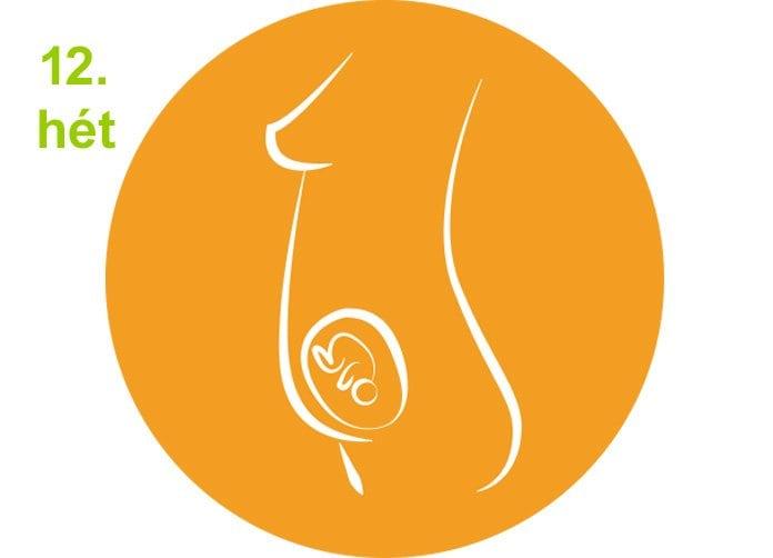 terhességi hetek - 12.hét