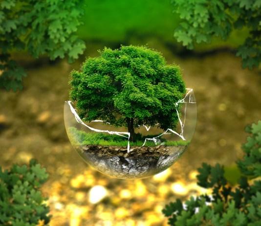 A természet szeretetének mágikus hatása - avagy miért jó a gyereknek, ha megismeri az erdőt?