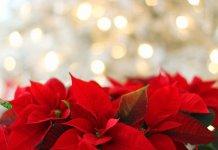 A legszebb karácsonyi idézetek