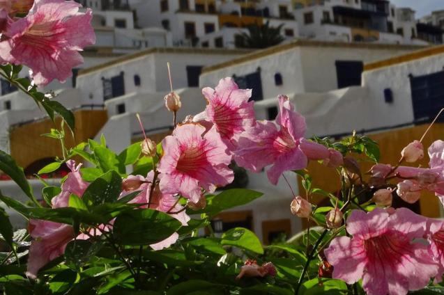 Morocco_Oualidia_08