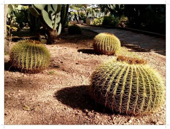 morocco_fez_jnane_sbil_garden_29