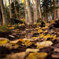 Hike-Flagstaff-Babbitts-Apen-Tree-and-Leaves