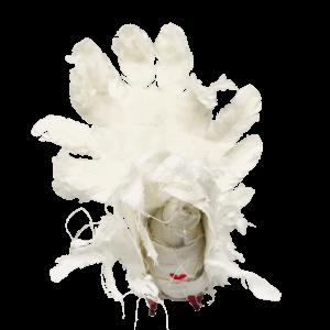 cloaca van textielvogel mummie