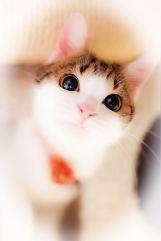 Cat-photography-Seiji-Mamiya11
