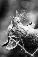 Cat-photography-Seiji-Mamiya16