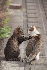 Cat-photography-Seiji-Mamiya24