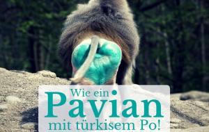 Pavian mit türkisem Po