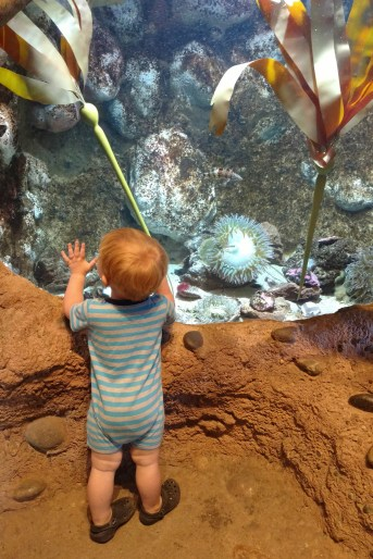 Rowen and the saltwater tank