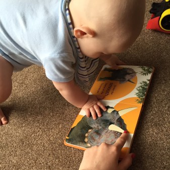 TM (almost bald 8 month old baby wearing a blue vest and blue stripe bib) trying to climb onto the dinosaur book while holding it open on a page where you can see the dinosaur horns are a different texture. I am touching the page and have pink nails.