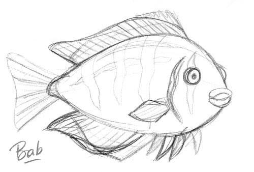 zigougoui-poisson