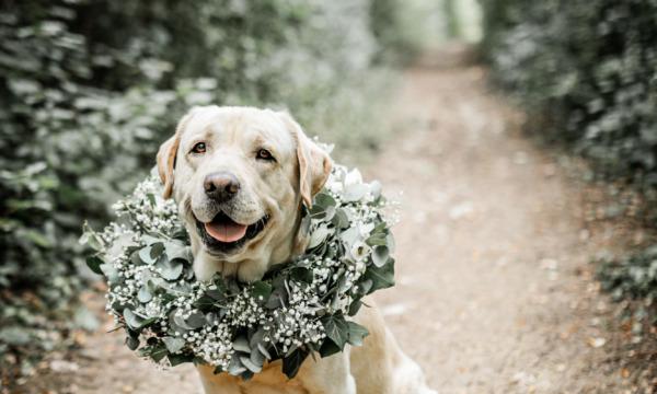 mariage-alsace-photographe-fleurs-babouchkatelier- (42)