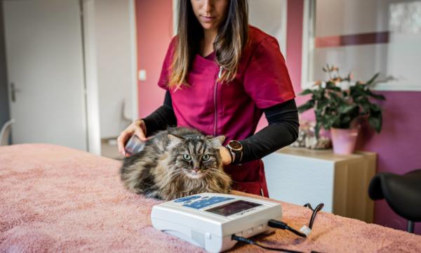 cabinet-veterinaire-physioveto-elsa-llerena-babouchkatelier- (48)