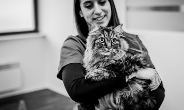 cabinet-veterinaire-physioveto-elsa-llerena-babouchkatelier- (55)