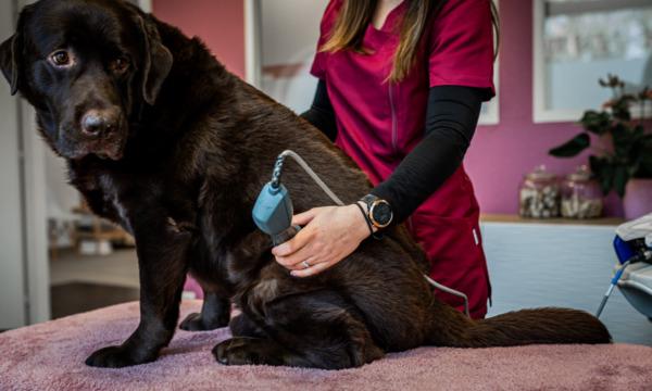 cabinet-veterinaire-physioveto-elsa-llerena-babouchkatelier- (9)
