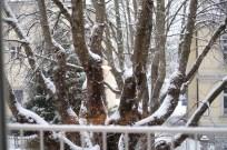 Es schneit sogar