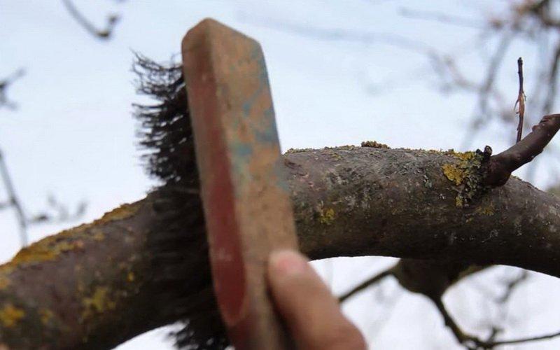 Как избавиться от грибов на дереве. Грибы-паразиты на садовых деревьях и борьба с ними