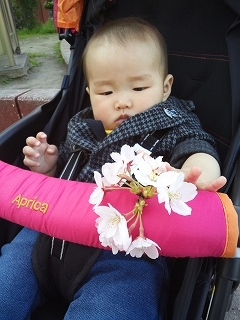 お花見 赤ちゃん