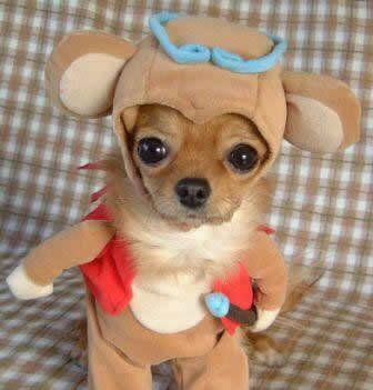 Cute Puppy Costume
