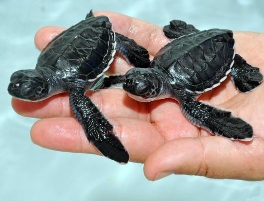 Beautiful Sea Turtle Photos