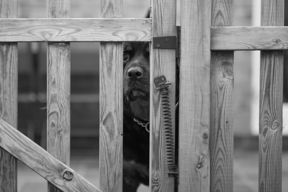 Dog looking through fence photo