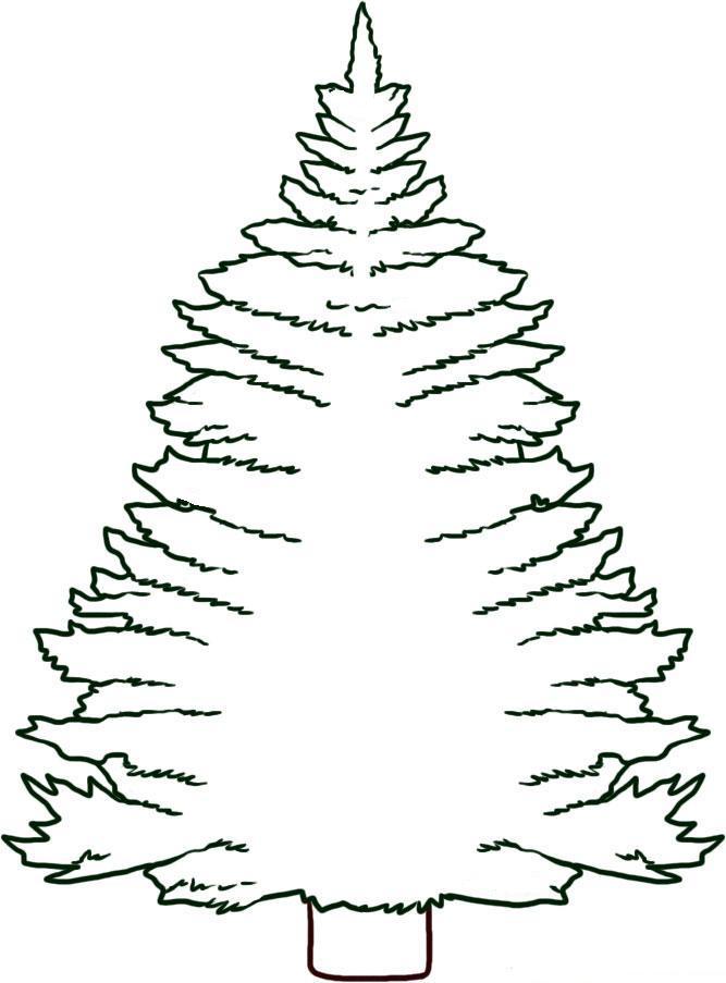 Картинки раскраски ель дерево