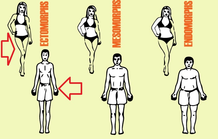 Endomorful – strategii specifice de antrenament si alimentatie