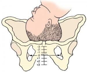 birth station chart