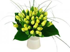 lemon tulip